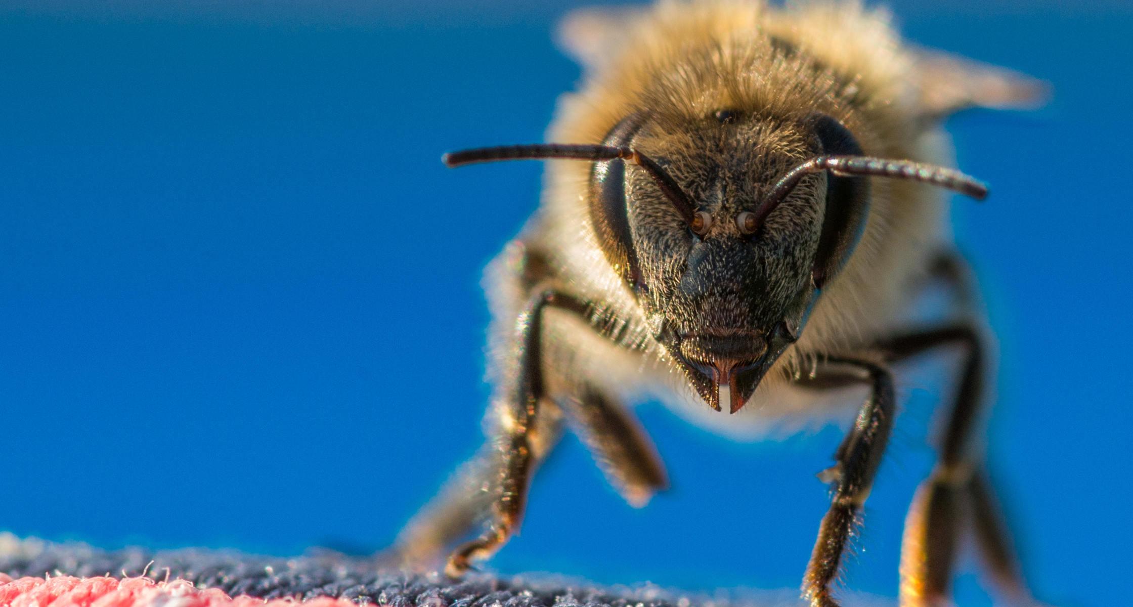 Bienenstich Schwangerschaft